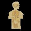 anatomy puzzle